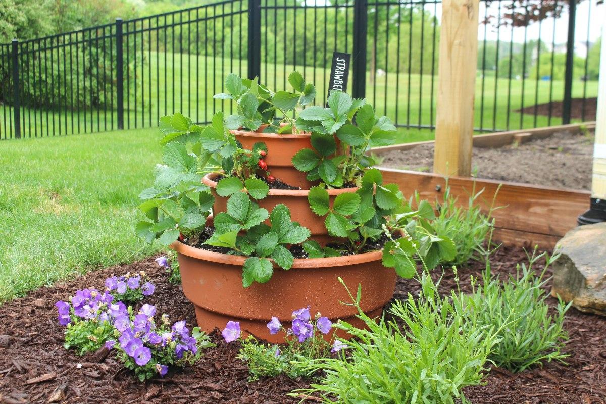 3 Tier Strawberry Planter Ruggy Diy