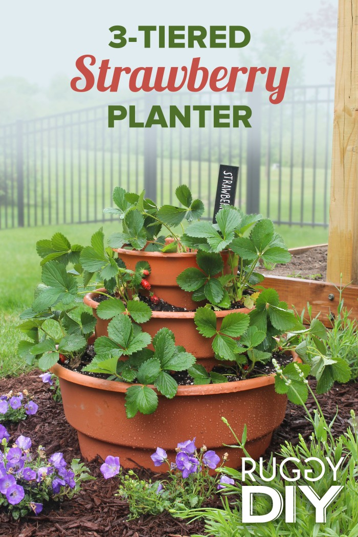 StrawberryPlanter
